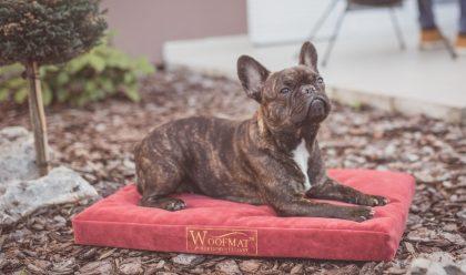 Gucci na Woofmat krevetu