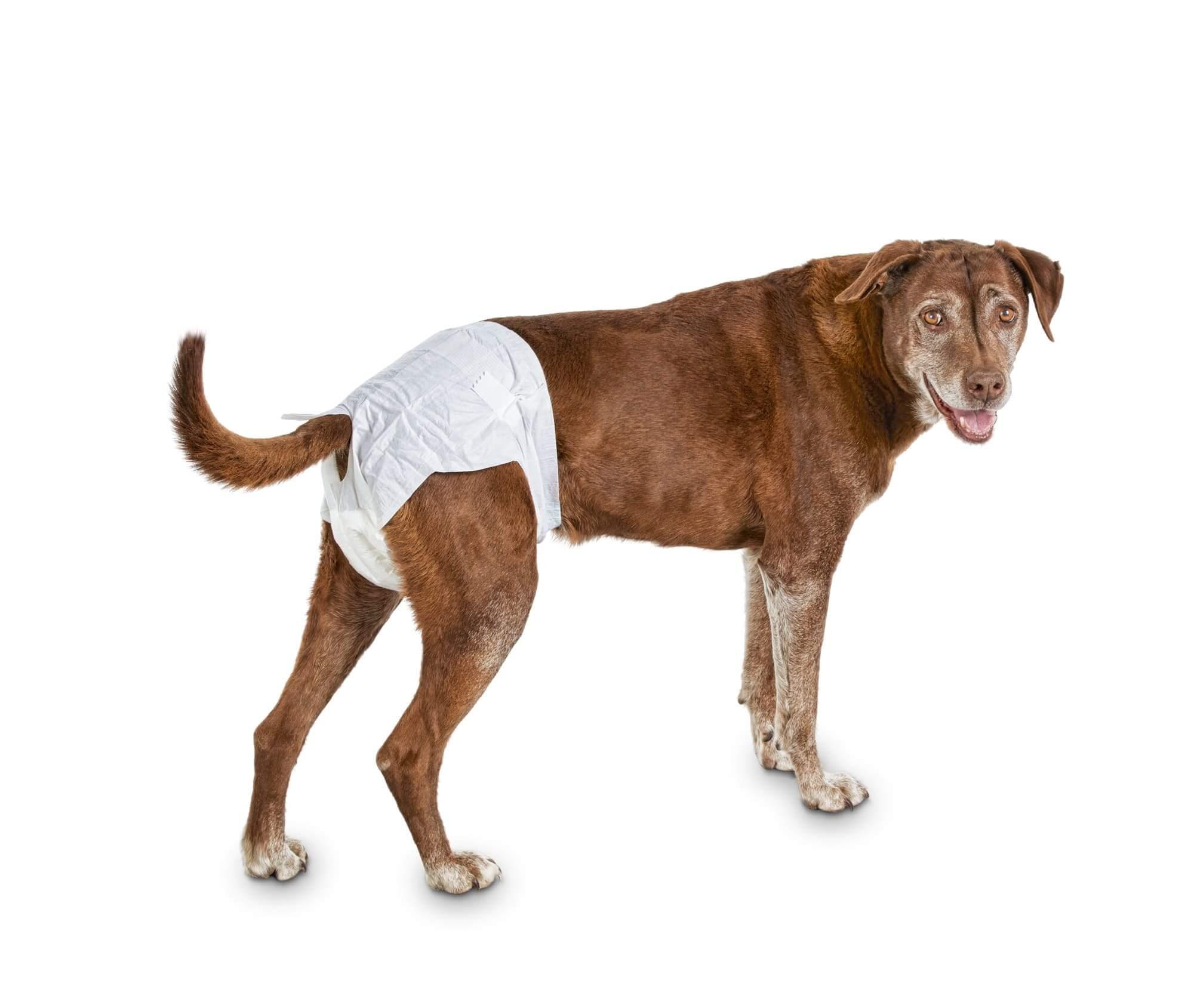 pelene za pse